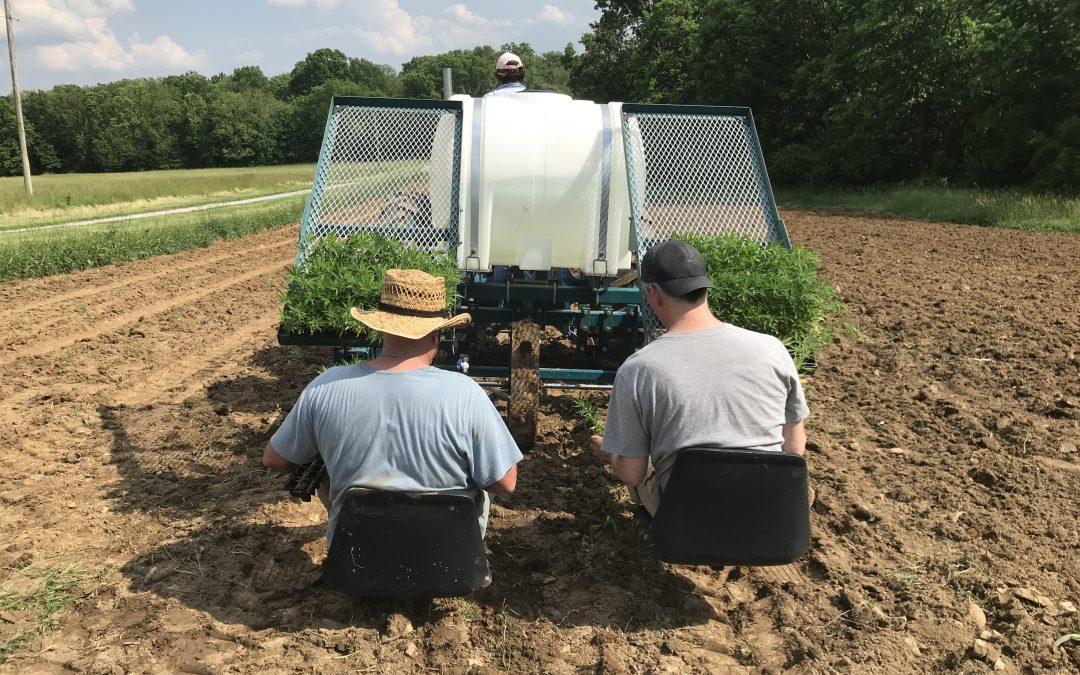 Modernizing Hemp Drying for Efficiency and Profit