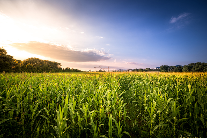 Solutions for a Wet Corn Milling Plant